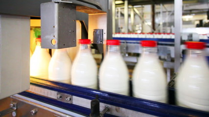 milk bottles in conveyor move, behind automation stamped date