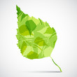 Concept background of  green birch leaf.
