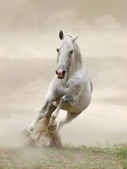 stallion in dust