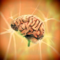 Cerebro y Células nerviosas