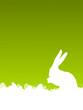 Osterkarte grün mit Hase
