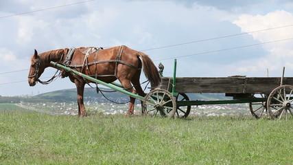 Farm horse in a field