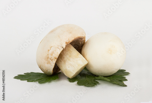 White mushrooms on white background