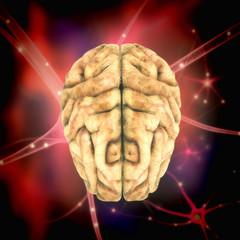 Cerebro con fondo células