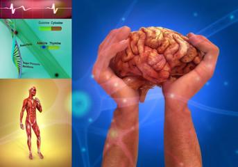 Composición anatomía, células, cerebro