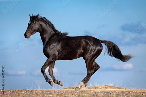 Fototapeten,tier,pferd,natur,black horse