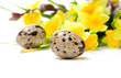 Quail eggs with flowers, isolated on white background.