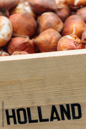 Crate with Dutch flower bulbs