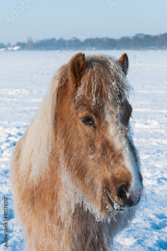 Portrait of a horse in winter
