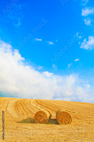 Hay rolls, blue sky and yellow field in summer.