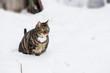 Kleiner dicker Kater im Schnee