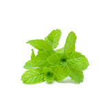 Mint aromatic herbs