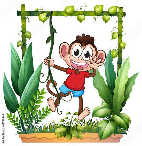 A monkey waving