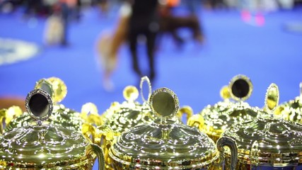 prize cups at unfocused background with people and dogs