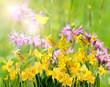 Happ Easter: spring awakening
