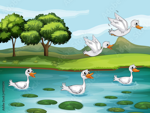 Tuinposter Rivier, meer Ducks and water