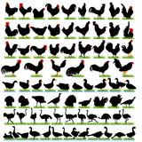 77 Farm Birds Detailed Silhouettes