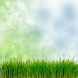 Frühling, Frohe Ostern, Hintergrund, Gras
