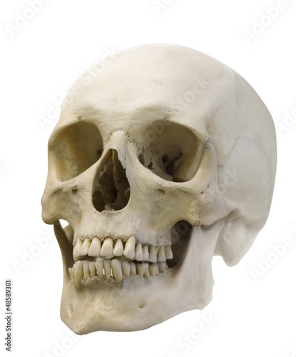 single skull isolated on white