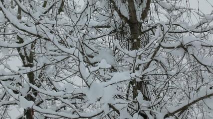 romantic snowing