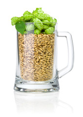 Mug for beer full of barley and hops isolated on white backgroun