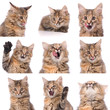 cat emotions composite isolated on white background