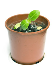 pot with green sprout