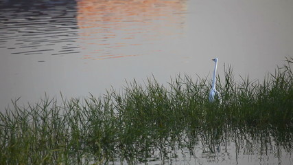 Heron standing in the shallow lake.