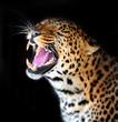obraz - Leopard
