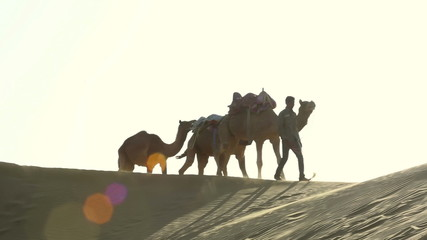Teamster pulling three camels across the desert.