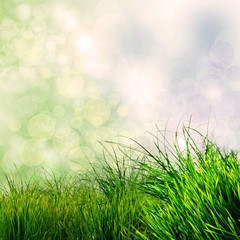 Frühlings-Hintergrund: grünes Gras mit Bokeh