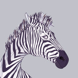 Zebra head, vector drawing EPS 10