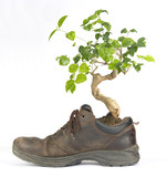 Ecological Footwear - bonsai plant grows in the shoe