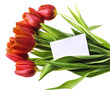 red tulips with an empty card