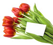 red tulips and an empty card