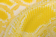 Snake Skin Yellow stock