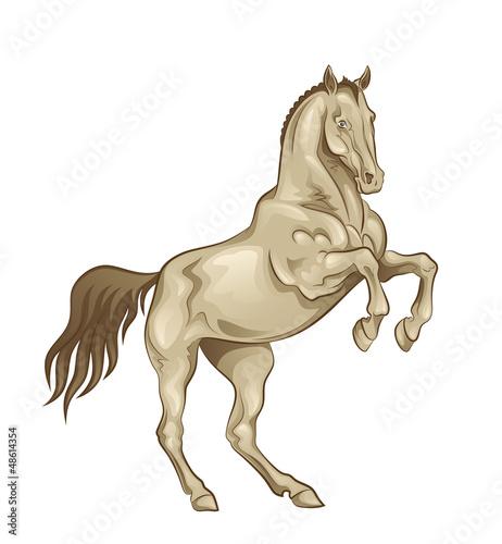Playful horse