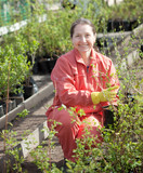 gardener chooses currants sprouts