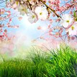 Fototapety Frühling, Frohe Ostern, Hintergrund mit Kirschblüten