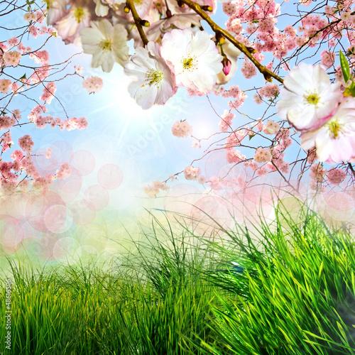 Frühling, Frohe Ostern, Hintergrund mit Kirschblüten