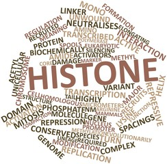 Word cloud for Histone