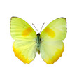 Papillon sur fond blanc en haute definition