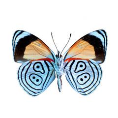 Papillon sur fond blanc en haute definition