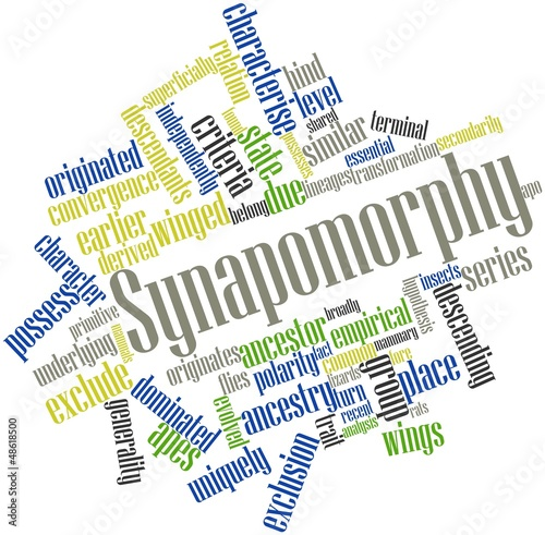 Word cloud for Synapomorphy