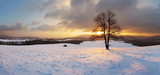 Fototapety Winter landscape with snow and alone tree - panorama