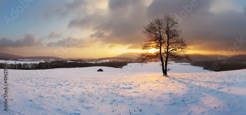 Winter landscape with snow and alone tree - panorama