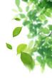 舞い散る新緑の葉っぱ