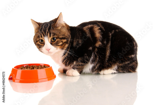 cat eating isolated on white