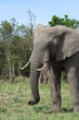 Elefanti fotografati dal lodge