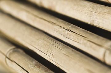 Close-up of dry bamboos